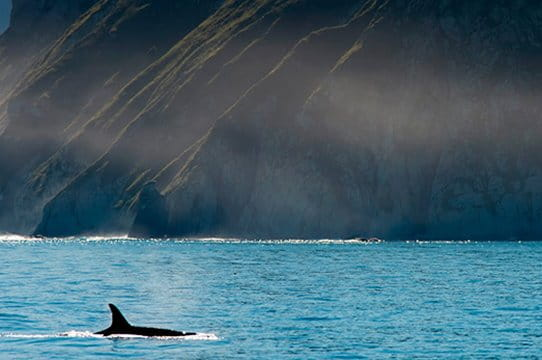 whales and orcas watching Kamchatka